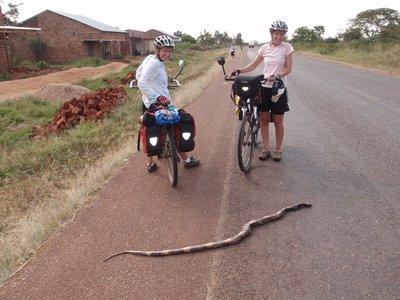 big dead snake