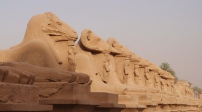 Rams at Luxor