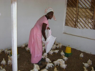 Aminata Ndao, Senegal.  Photo Courtesy of Kiva.org