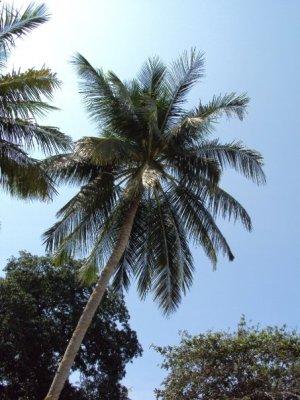 Paradise_Palms.jpg