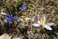Greece55Mt..flowers.jpg