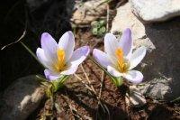 Greece56Mt..flowers.jpg