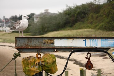 Chatham, 014 Cape Cod
