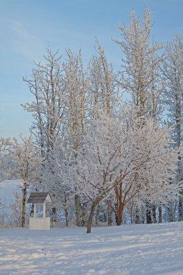 Alberta_047e.jpg
