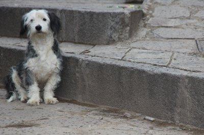 Peru_085e.jpg
