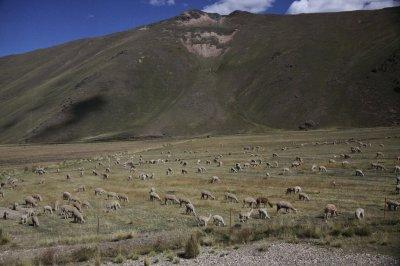 Peru 1125