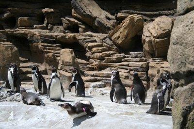 Woodland_Park_Zoo_013.jpg