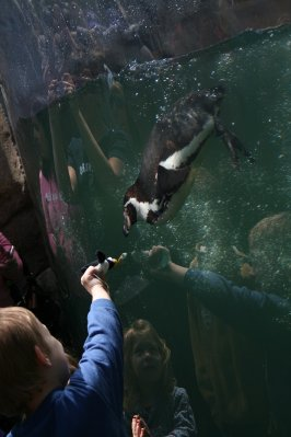 Woodland_Park_Zoo_025.jpg