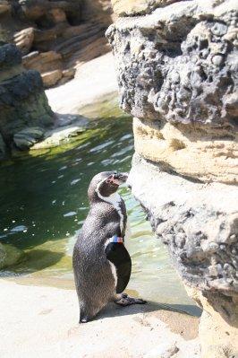 Woodland_Park_Zoo_031.jpg