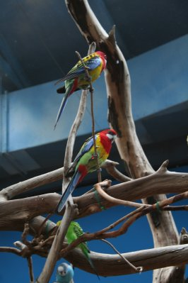 Woodland_Park_Zoo_054.jpg