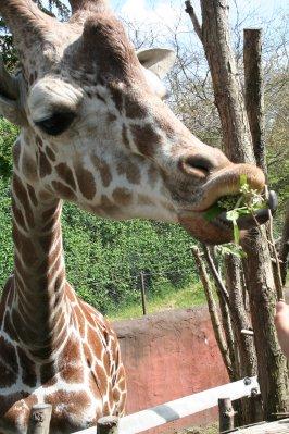 Woodland_Park_Zoo_078.jpg