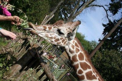 Woodland_Park_Zoo_082.jpg