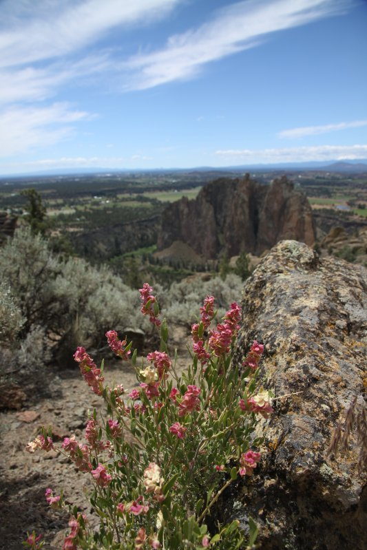 Oregon 104