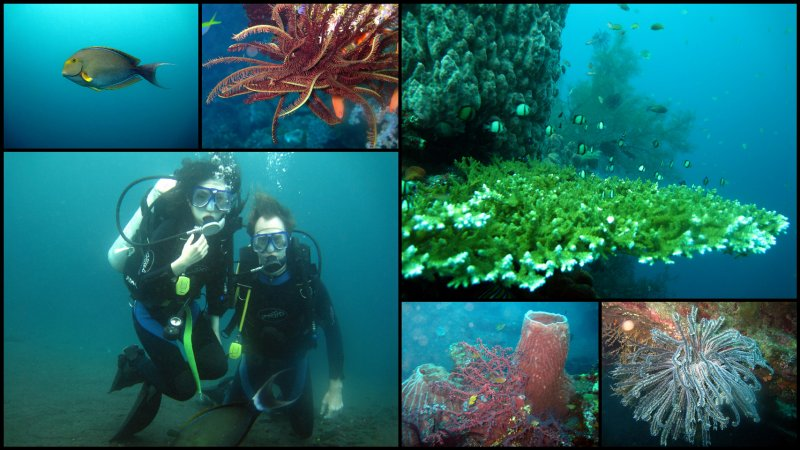 large_Bali_Scuba_Diving.jpg