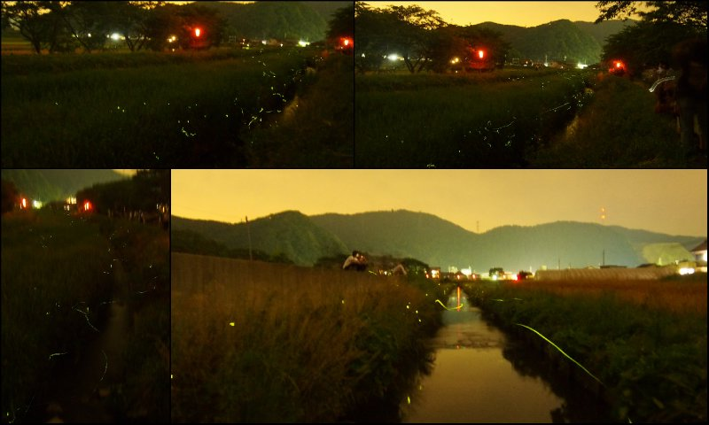 large_Fireflies4.jpg