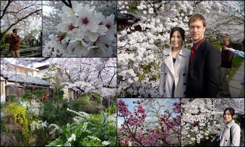 large_Hanami_-_K..iwako-1.jpg
