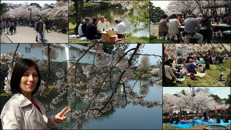 large_Hikone_Hanami8.jpg