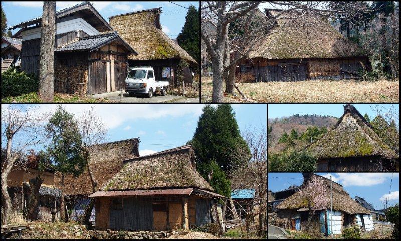 large_Local_Hanami5.jpg