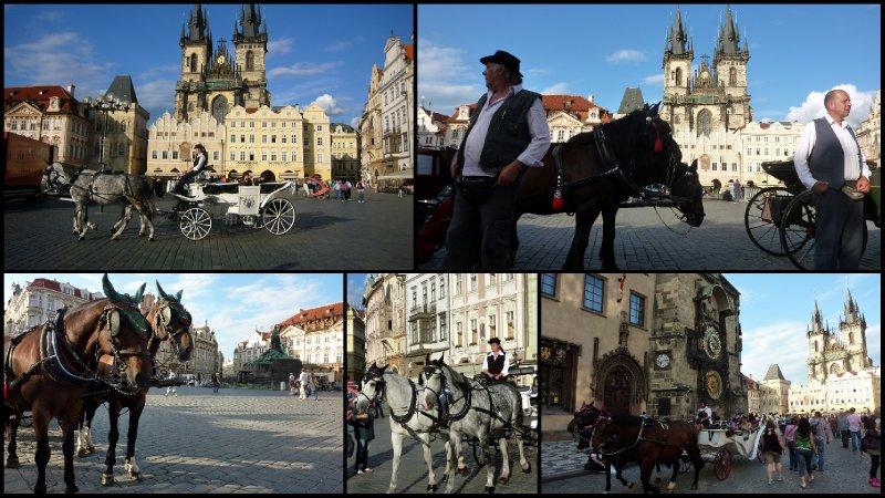 large_Mini-Honey..Prague3.jpg