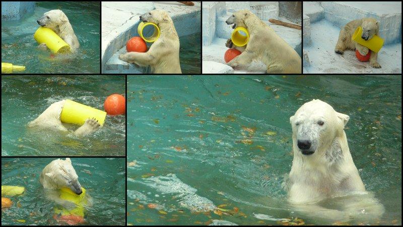 large_Osaka_Zoo.jpg