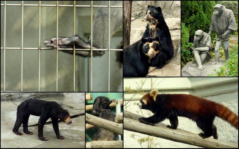 large_Osaka_Zoo2.jpg
