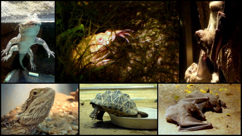 large_Osaka_Zoo3.jpg