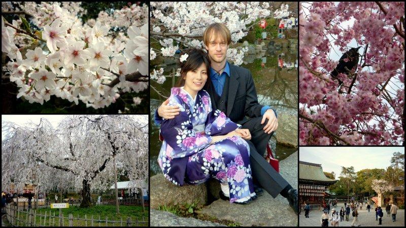 large_Osaka_and_..Hanami4.jpg