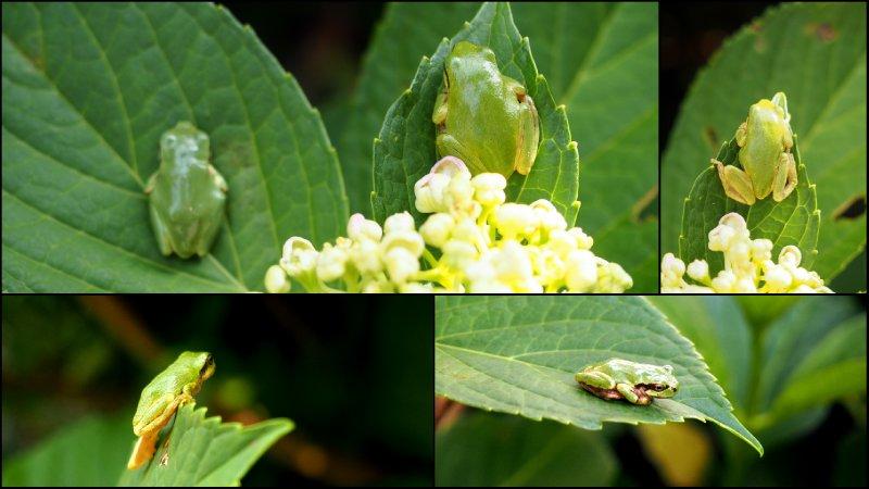 large_Spring.jpg