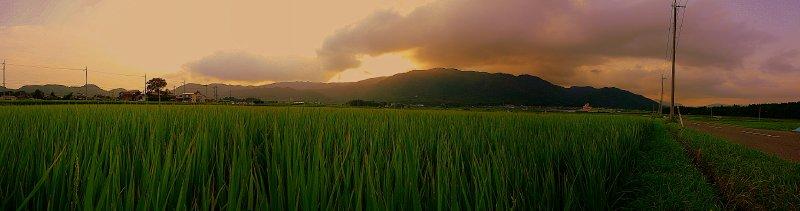 large_rice_fields.jpg