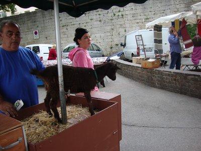 Arles Goat