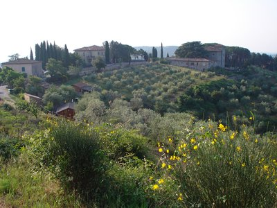 The Contessa&#39;s Vineyard