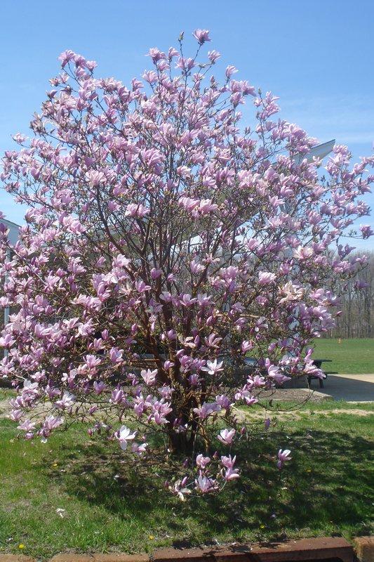 Spring Scene