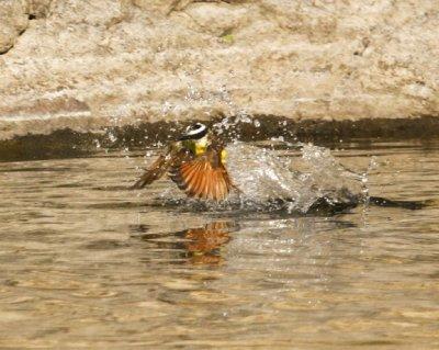 Bird_clean..water_2.jpg