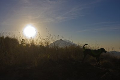 Dog_and_volcano.jpg