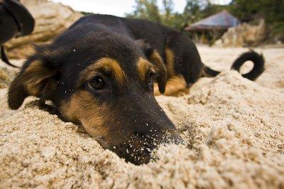 Dog_in_sand.jpg
