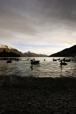 Ducks_on_q..wn_lake.jpg