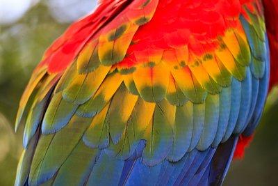 Macaw_feathers.jpg