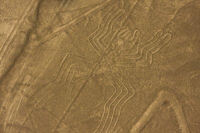 NazcaAnt.jpg