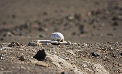 Skull_in_desert.jpg