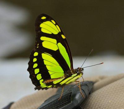 Yellow_butterfly.jpg