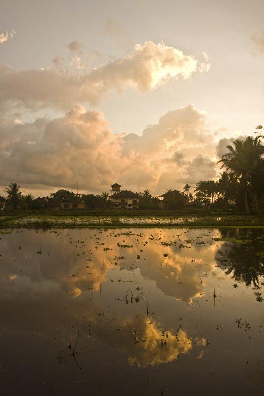rice paddies 2