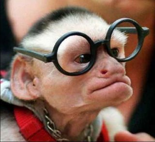 http://photos.travellerspoint.com/204753/glasses_monkey.jpg