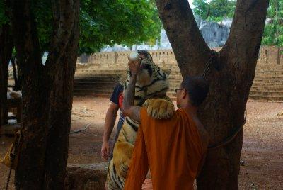 Tygr a mnich