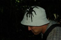 Tarantule na hlave