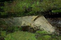 Hnizdo tarantule