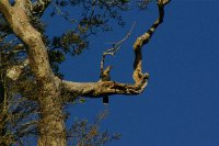 Ptak na strome