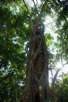 Strom zabijak