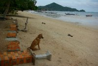 Plaz na Ko Tau