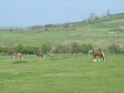 Horses near Beach