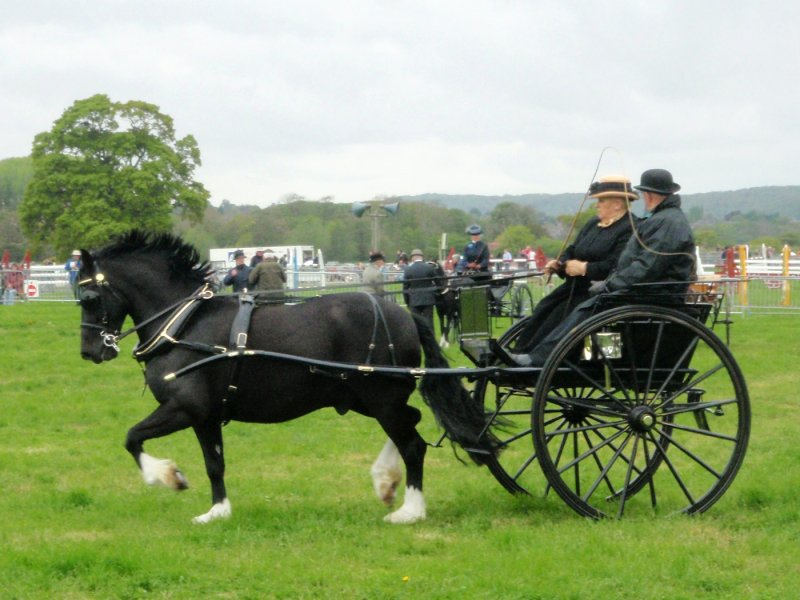 Horse &#38; Carriage